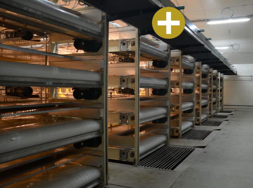 FIT Farm Innovation Team Golden Broiler PRIME - Broiler cross conveyer lift