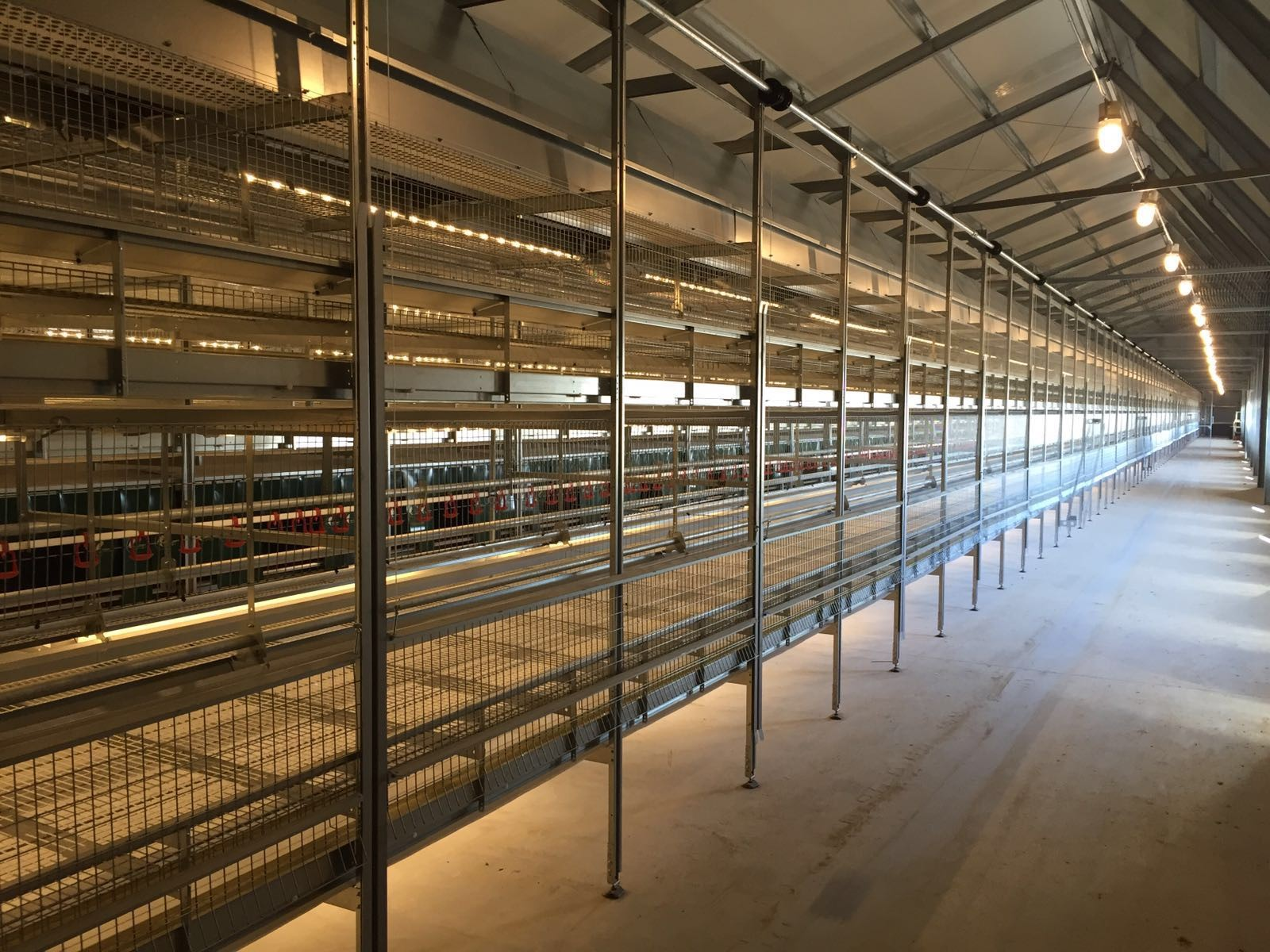 FIT Farm Innovation Team - Golden Layer NATURE_1 cage free aviary system - move in ahead 1
