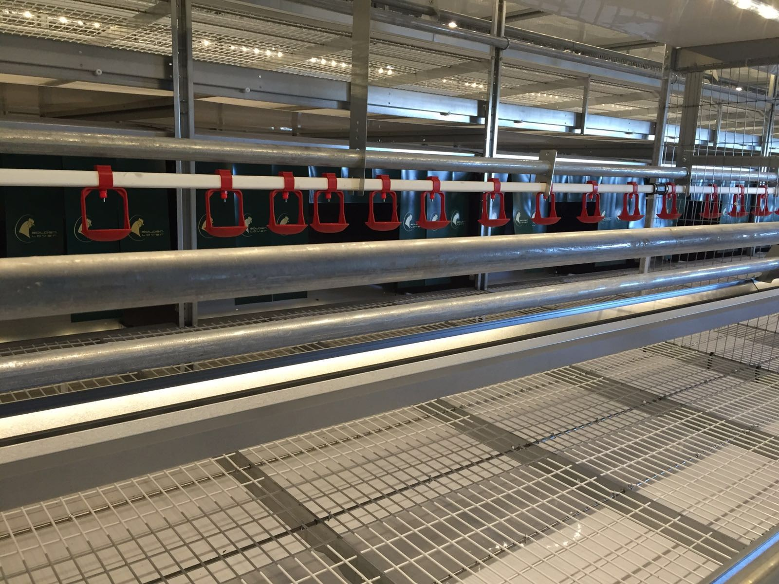 FIT Farm Innovation Team - Golden Layer NATURE_1 cage free aviary system - move in ahead 2