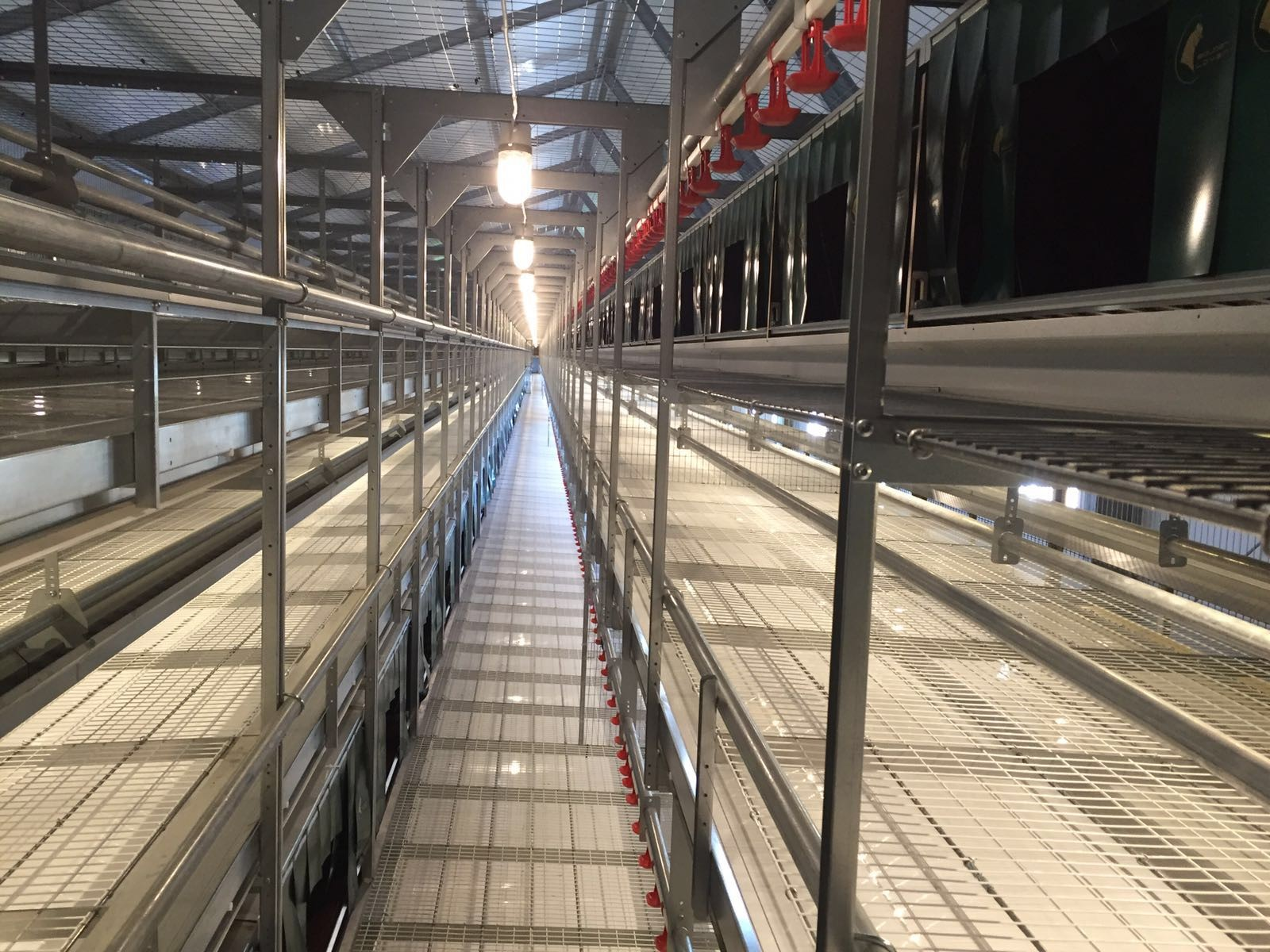 FIT Farm Innovation Team - Golden Layer NATURE_1 cage free aviary system - move in ahead 3
