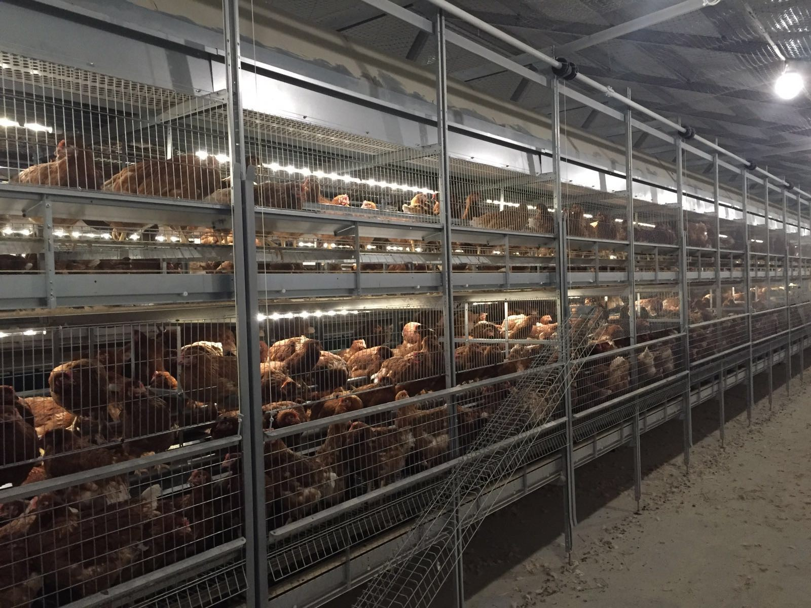 Fit Farm Innovation Team Golden Layer cage free aviary NATURE 1 3
