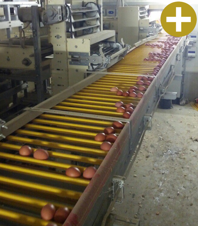 Fit Farm Innovation Team Golden Layer cage free aviary egg conveyer view